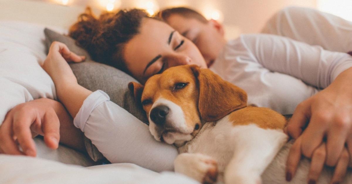 cane dorne nel lettone