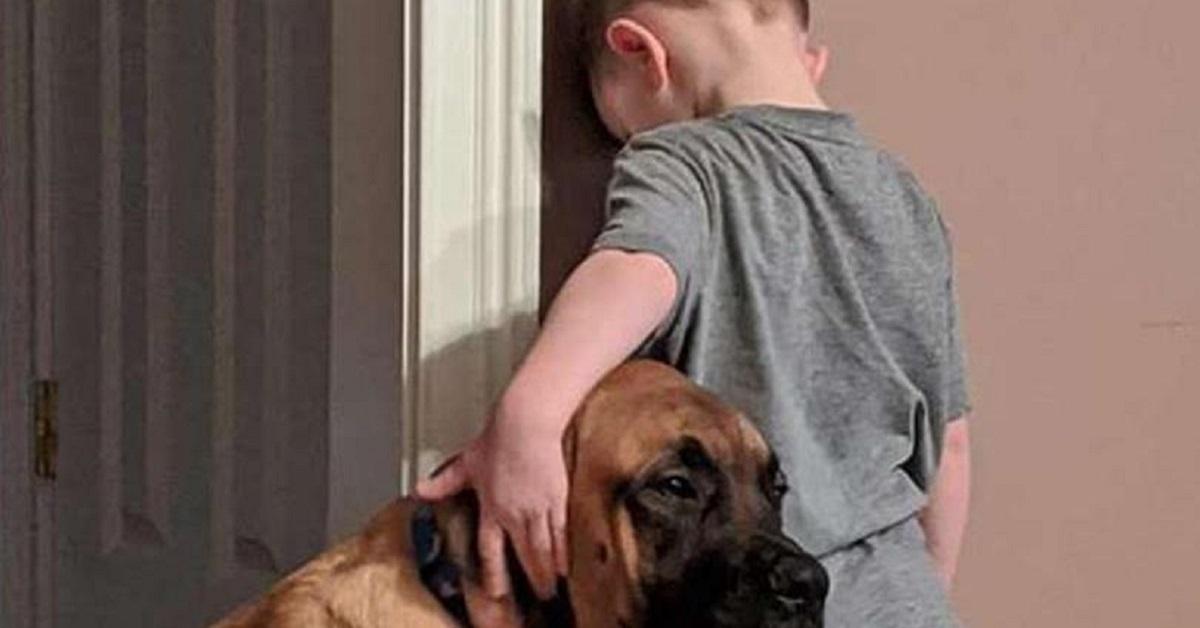Cane si lamenta se piange un neonato: tutti i motivi e i rimedi