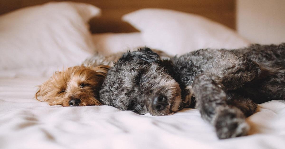 cani su letto