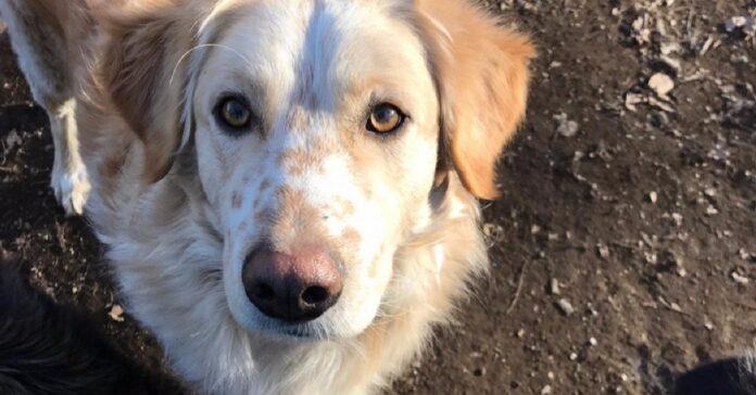 cane bianco e miele