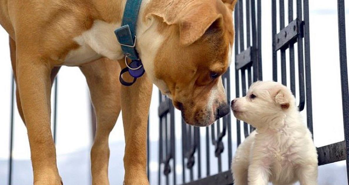 Cani adulti, emergenze comuni: quali sono e come si possono affrontare