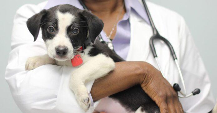 veterinario tiene in braccio un cucciolo