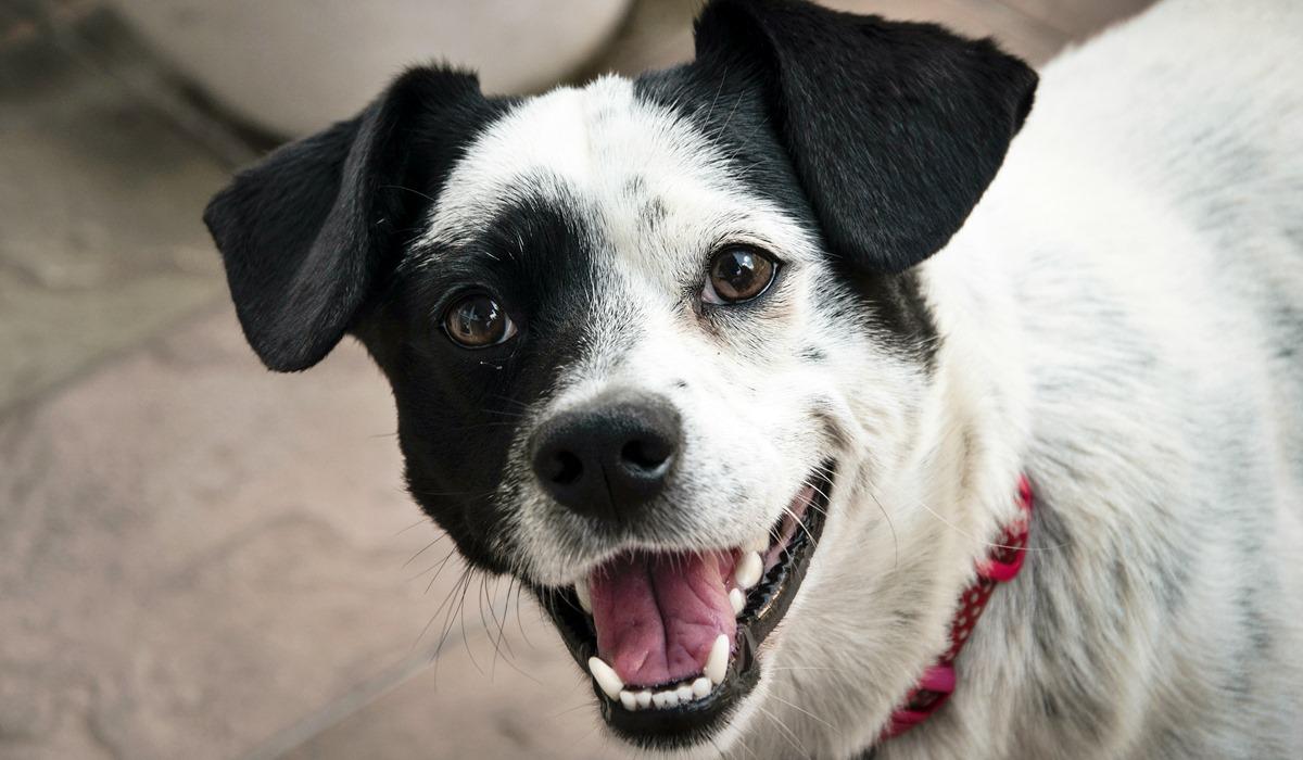 Cannoli per cani: la ricetta per quattrozampe da leccarsi i baffi