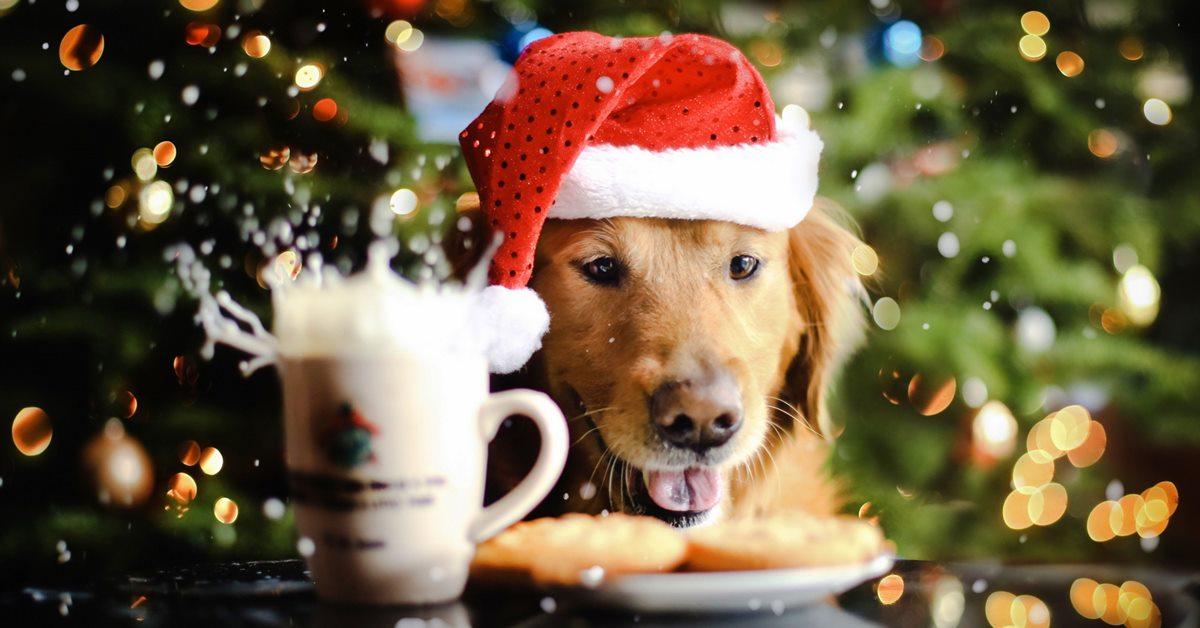 biscotti per il cane