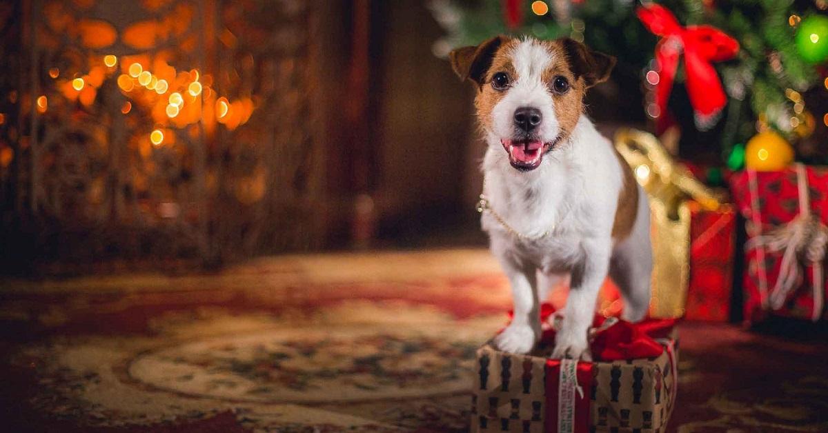 cane festeggia il natale