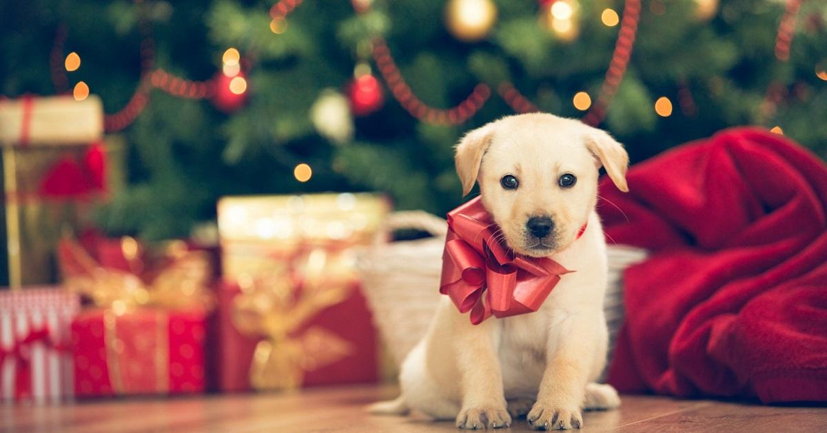 cane pacco regalo