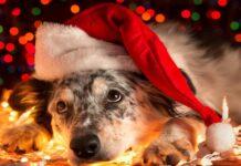 cane sotto albero di natale