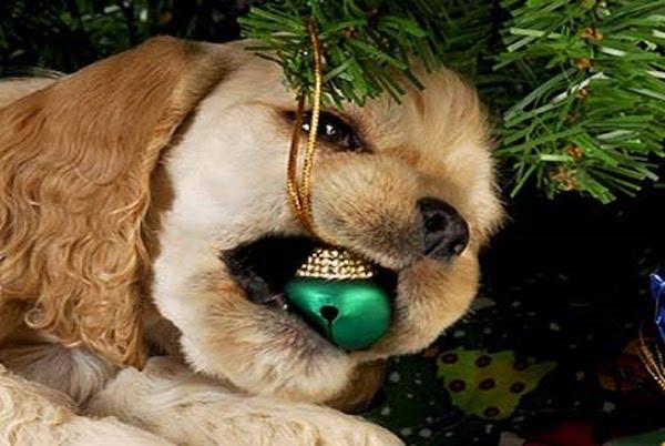 Cosa non fare con il cucciolo di cane a Natale: 5 comportamenti da evitare
