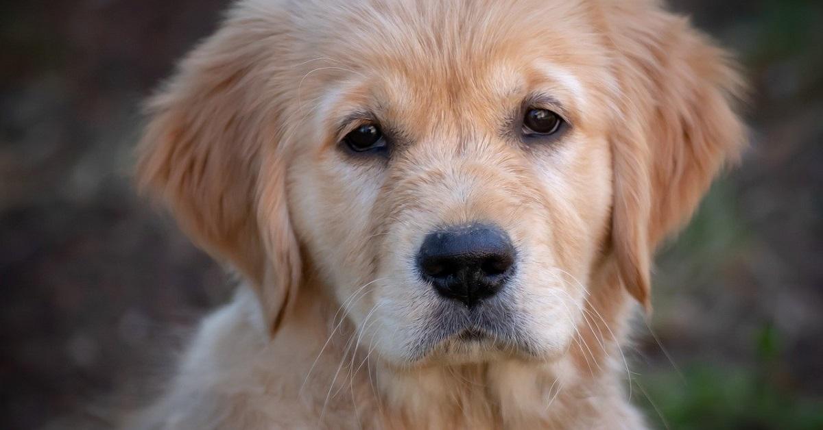 Cuccioli di cane, emergenze comuni: quali sono e come si possono affrontare