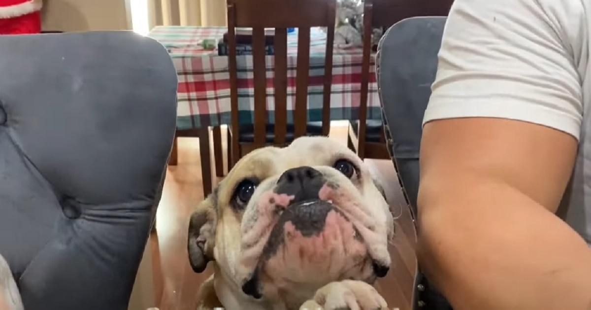 cucciola tavolo guardare
