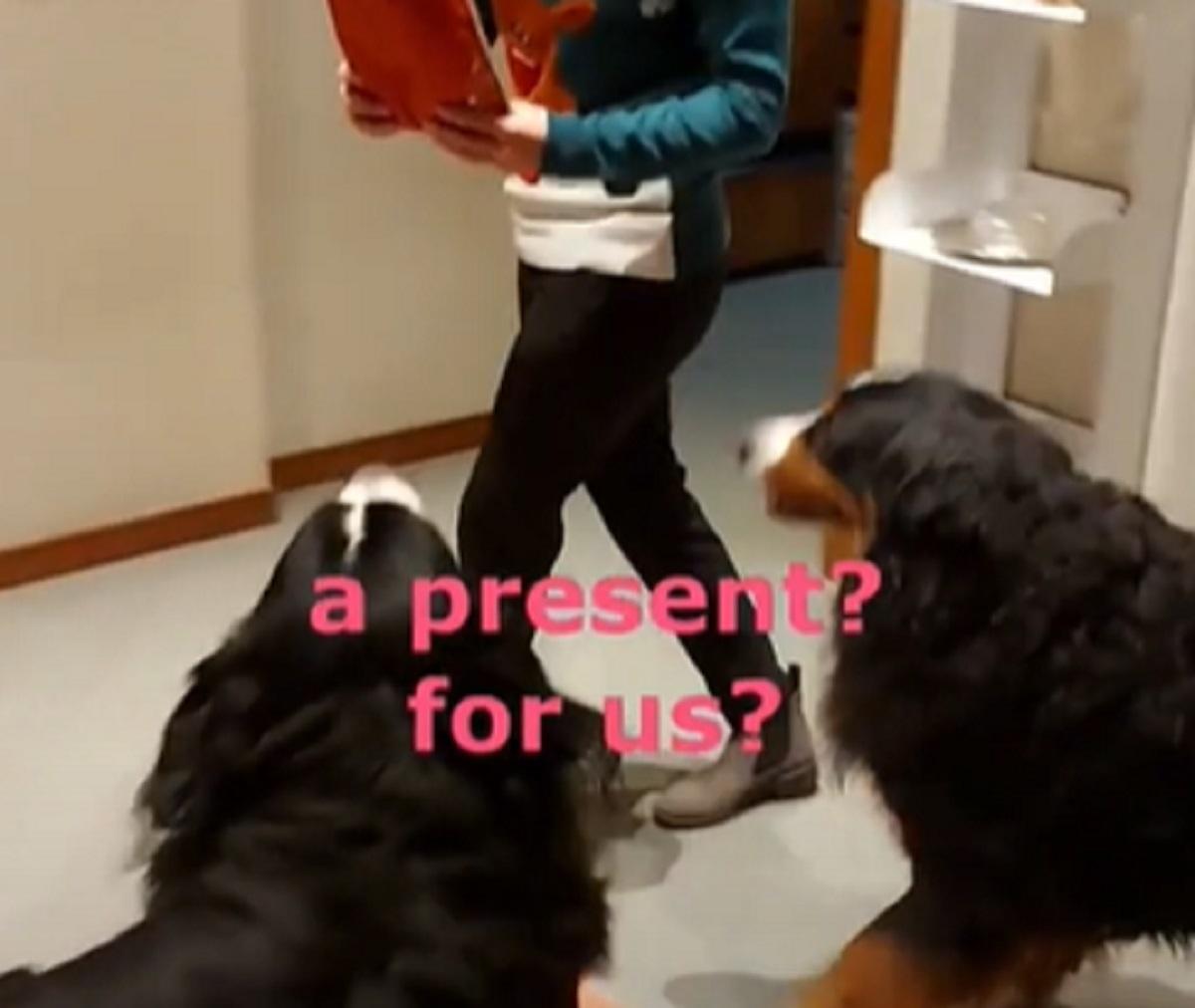 sorpresa cagnolini natale