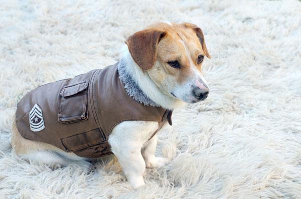 Cuccioli di cane d'inverno: consigli utili per tenerli al caldo dalla nascita ai primi mesi