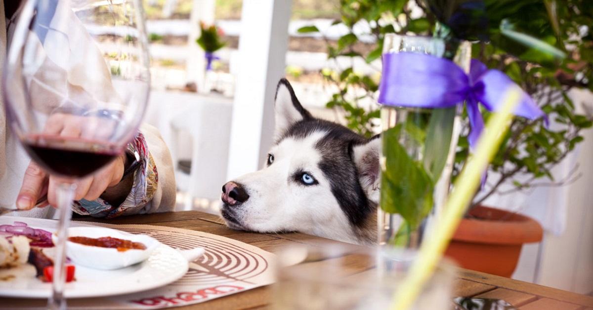 cucciolo di husky con muso sul tavolo