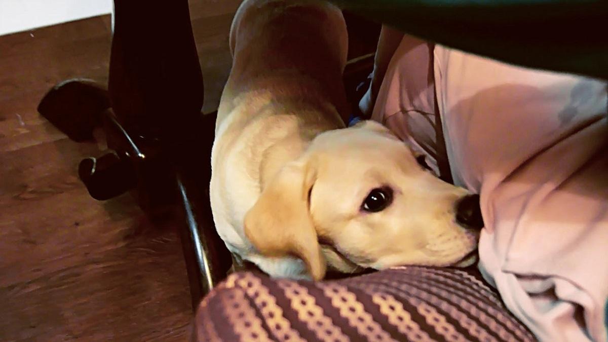 Cuccioli di cane e cenone di Natale: tutti i modi per dissuadere Fido dall'elemosinare