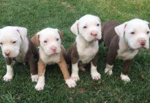 quattro cuccioli su un prato