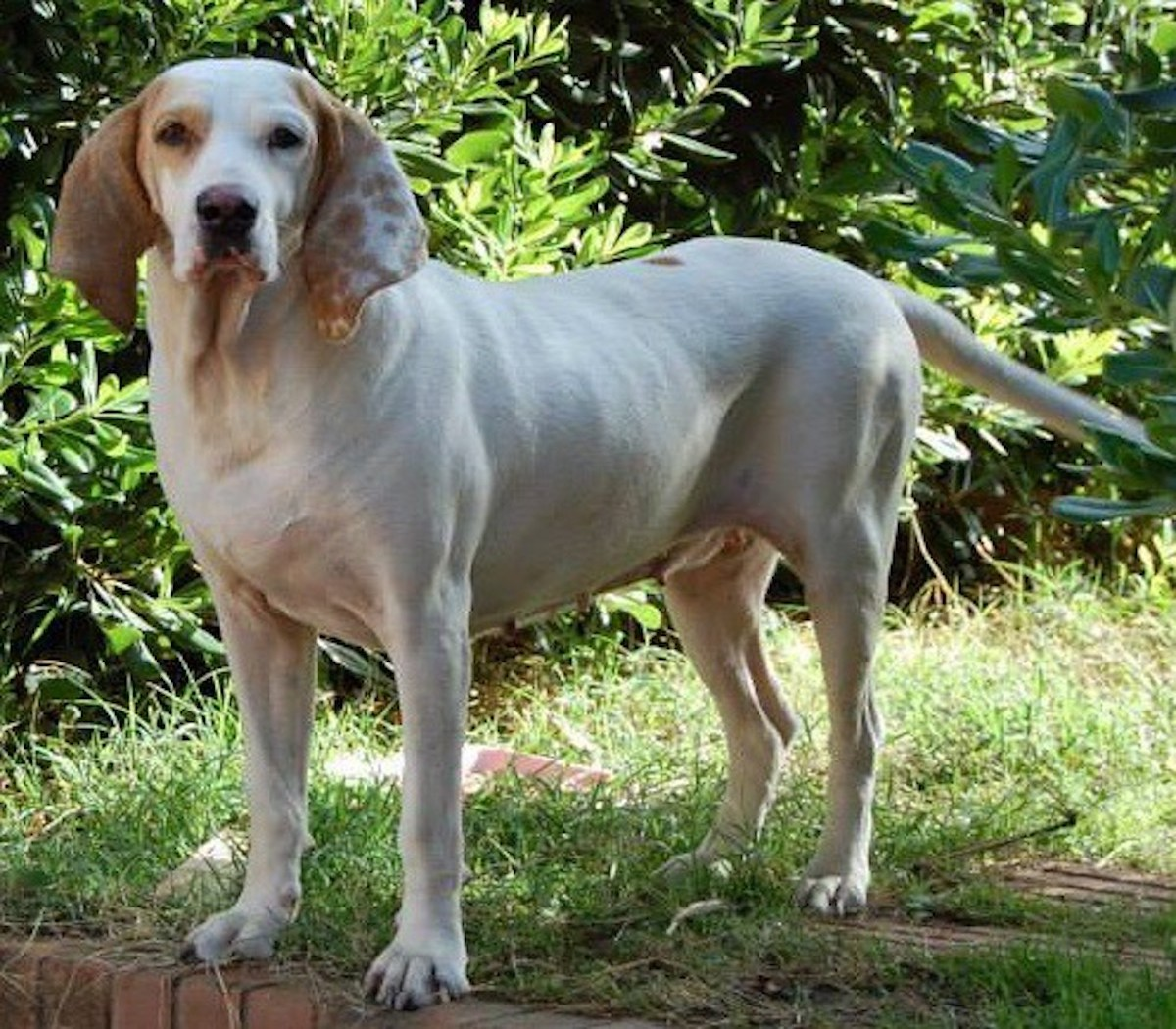 Cuccioli di Porcelaine, quali giochi fargli fare per stimolarli? Ecco cosa sapere