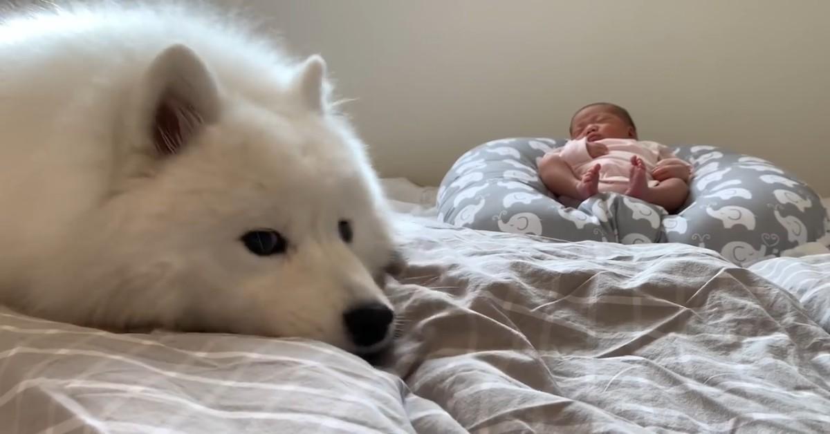 Cuccioli di cane sorvegliano la sorellina appena nata (VIDEO)
