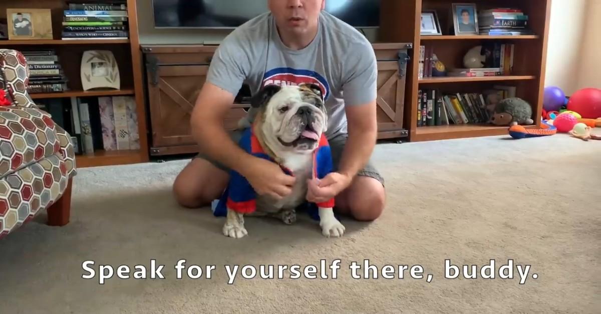 Cucciolo di Bulldog inglese festeggia Halloween con i suoi padroni (VIDEO)