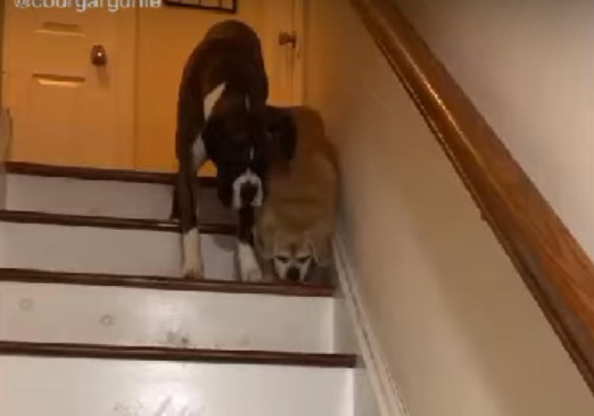 cagnolino cieco aiuto