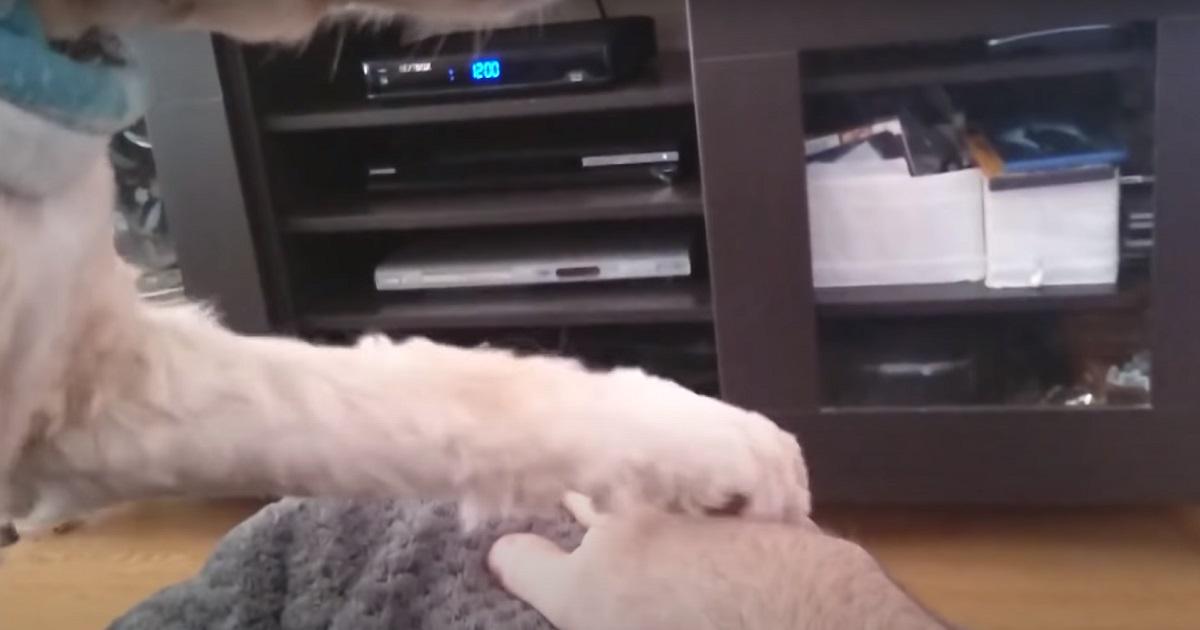 Cucciolo di cane non vuole che il proprietario smetta con le carezze, il video è una perla da non perdere