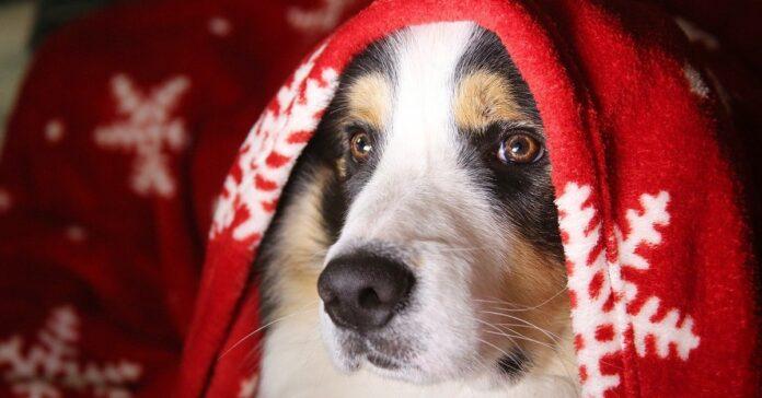 cucciolo di cane che scarta i regali di Natale
