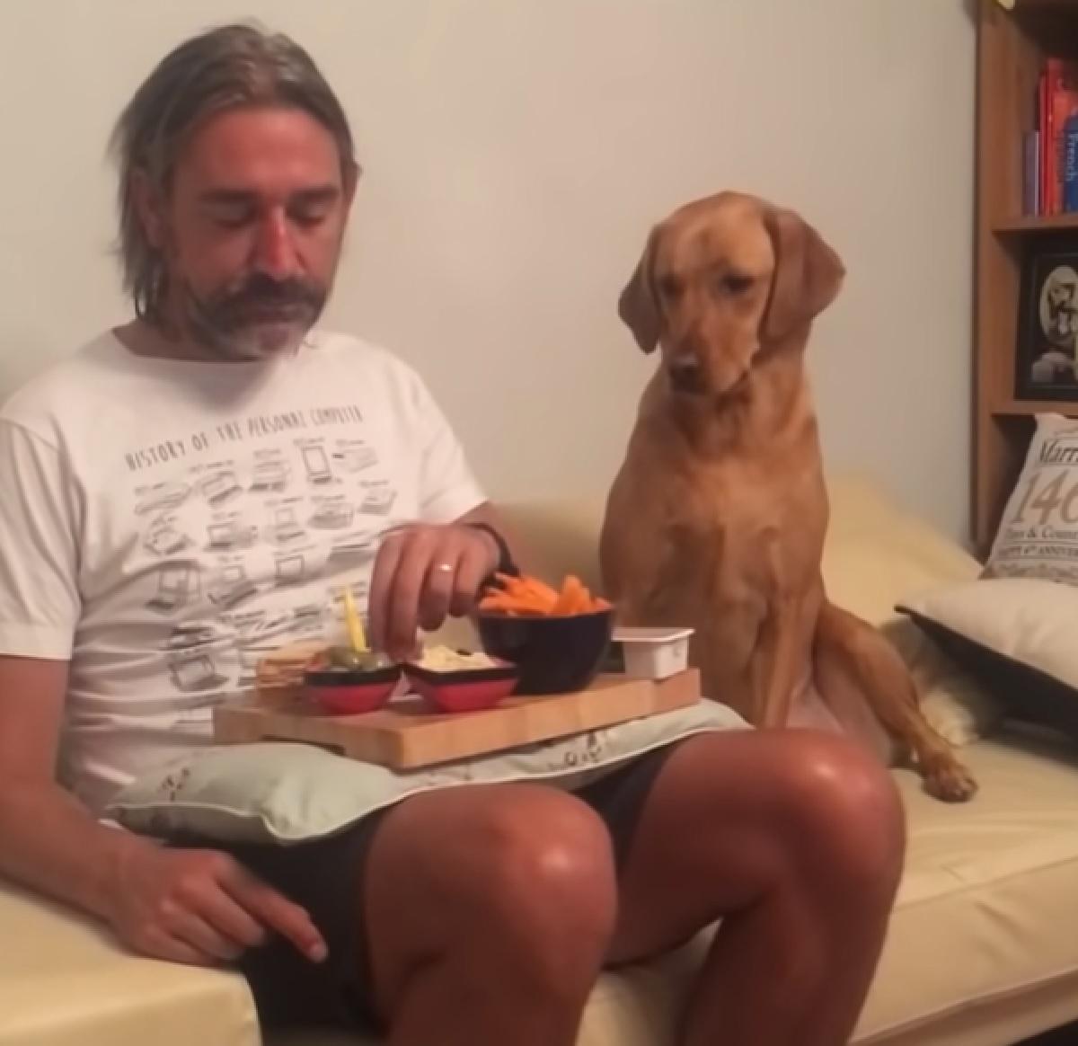 Cucciolo di cane fissa il cibo, ciò che fa quando capisce di essere stato scoperto è esilarante, ecco il video