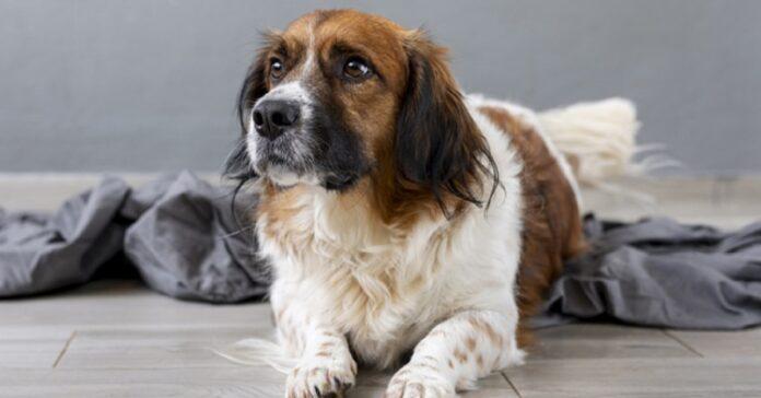 cucciolo di cane fissa cibo ciò che fa quando capisce scoperto esilarante video