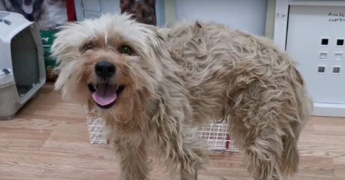 cucciolo di cane ha paura minimo contatto video incredibile rinascita