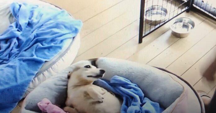 cane alzarsi letto