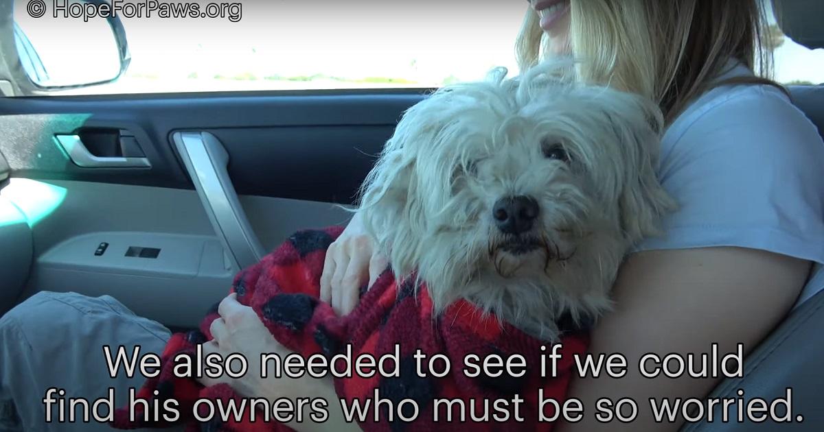 Cucciolo di cane smarrito non ha più speranze di farcela, nel video il miracoloso intervento dei soccorritori