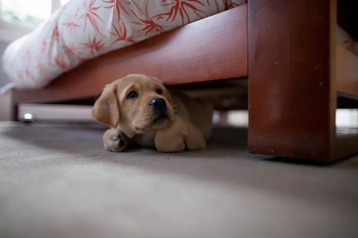 cucciolo sotto al letto