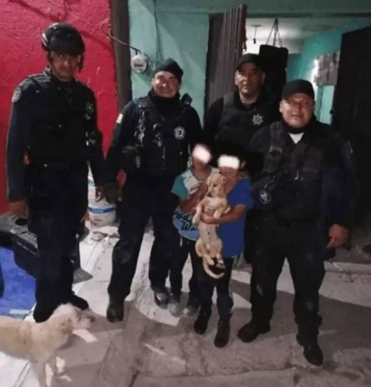 Cucciolo di chihuahua finisce tra due muri: il salvataggio in un video
