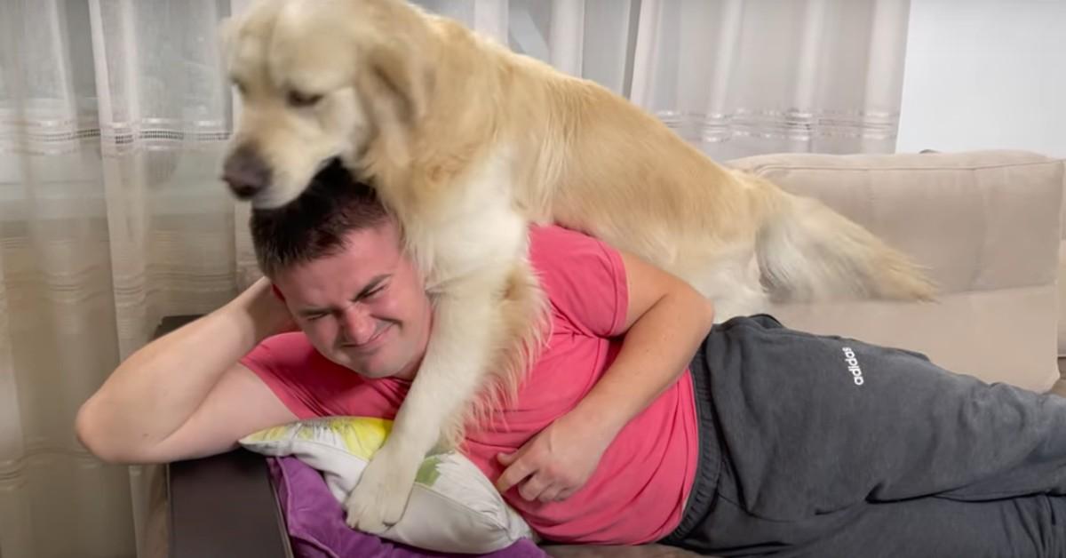 Un cucciolo di Golden Retriever disturba il proprio padrone che riposa (VIDEO)