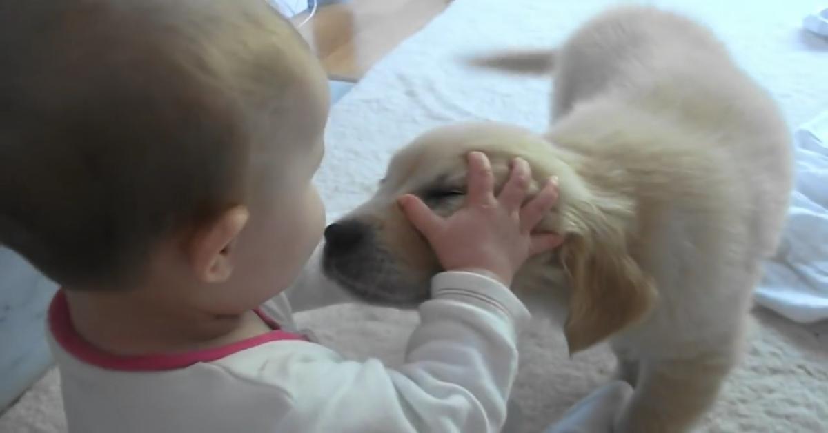 Cucciolo di Golden Retriever incontra la sua sorellina umana per la prima volta (VIDEO)
