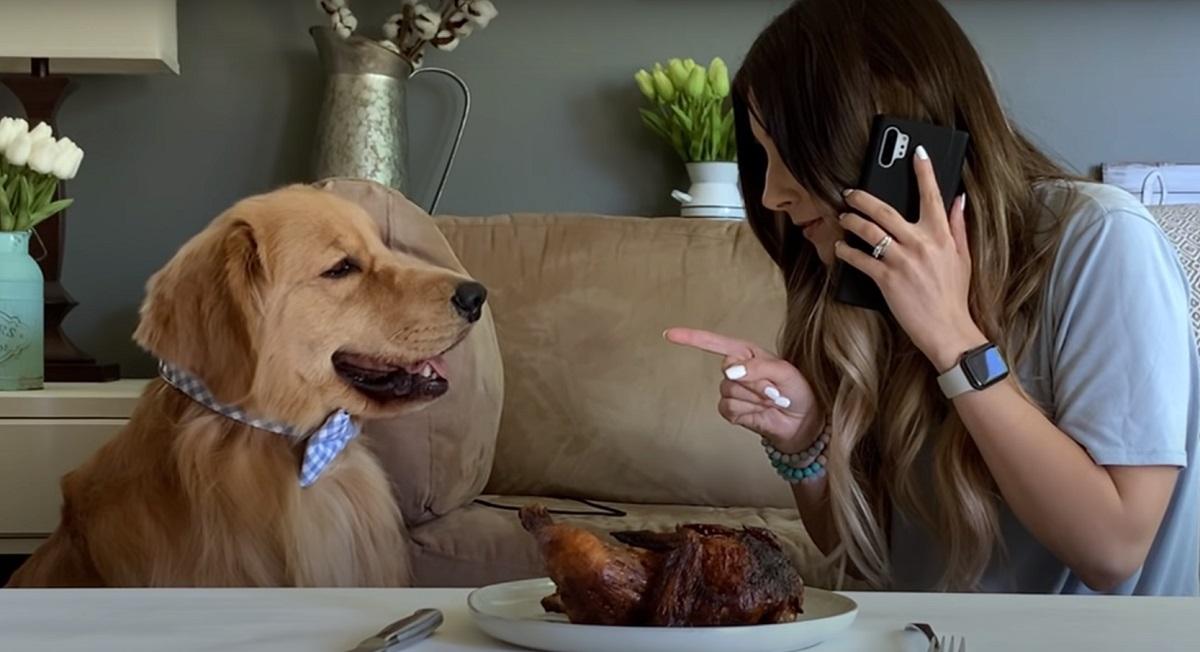 Il cucciolo Golden Retriever non deve mangiare il pollo, la tentazione è molta e il video è mozzafiato