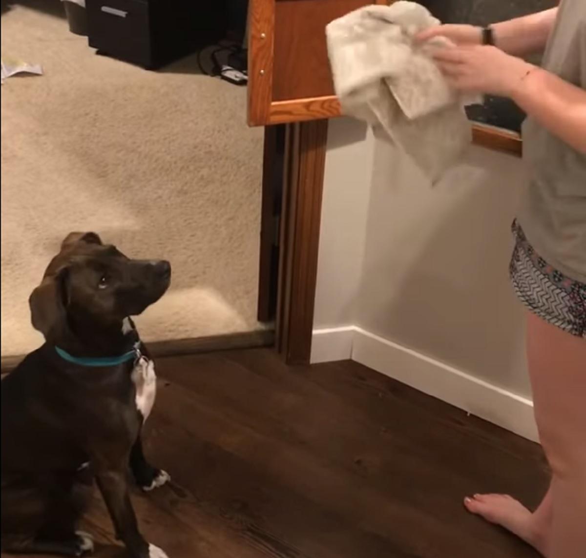Cucciolo meticcio assiste ad un trucco di magia, il video della sua reazione sorpresa è da oscar