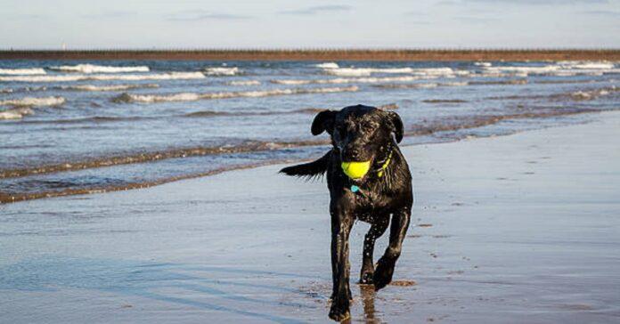 mare cucciolo acqua
