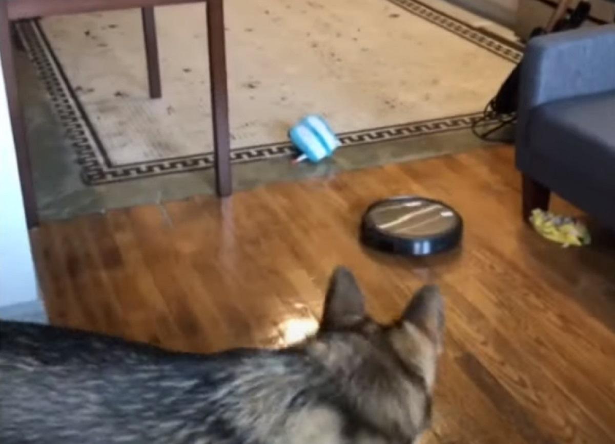 paura cucciolo foto