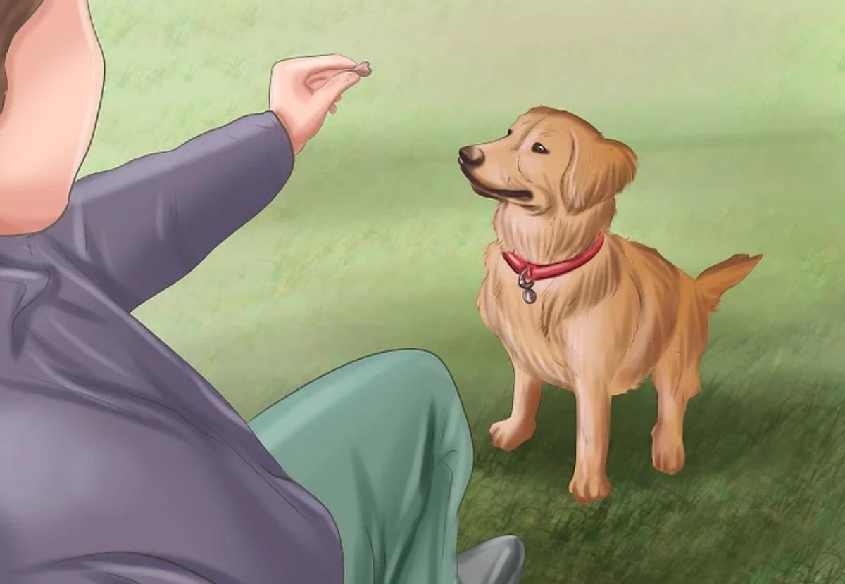 Curare le ferite dei cani con il rosmarino, il rimedio che dovrebbero conoscere tutti (video)