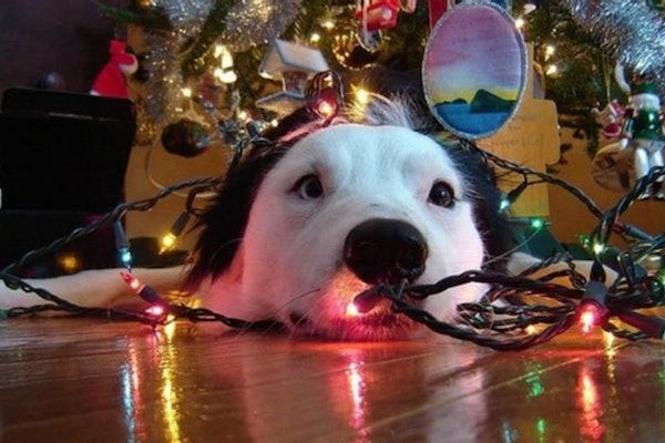 distrarre il cucciolo di cane dall'albero di Natale