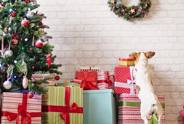 Distrarre il cucciolo di cane dall'albero di Natale: tutte le attenzioni e i consigli per riuscirci