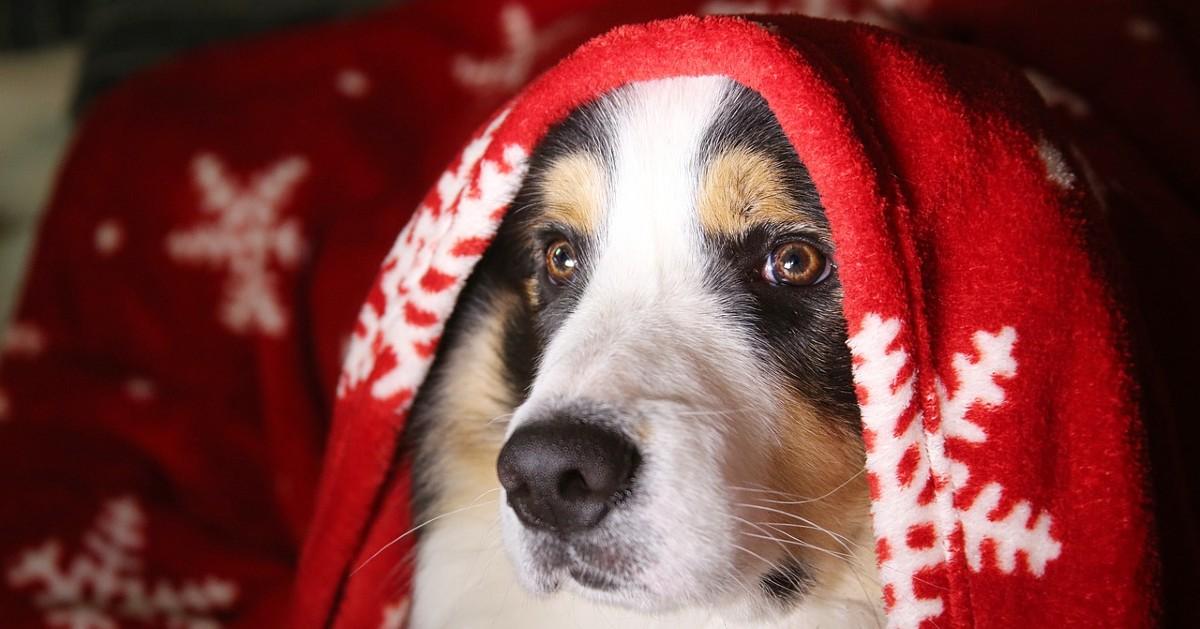 cuccioli di cane a capodanno