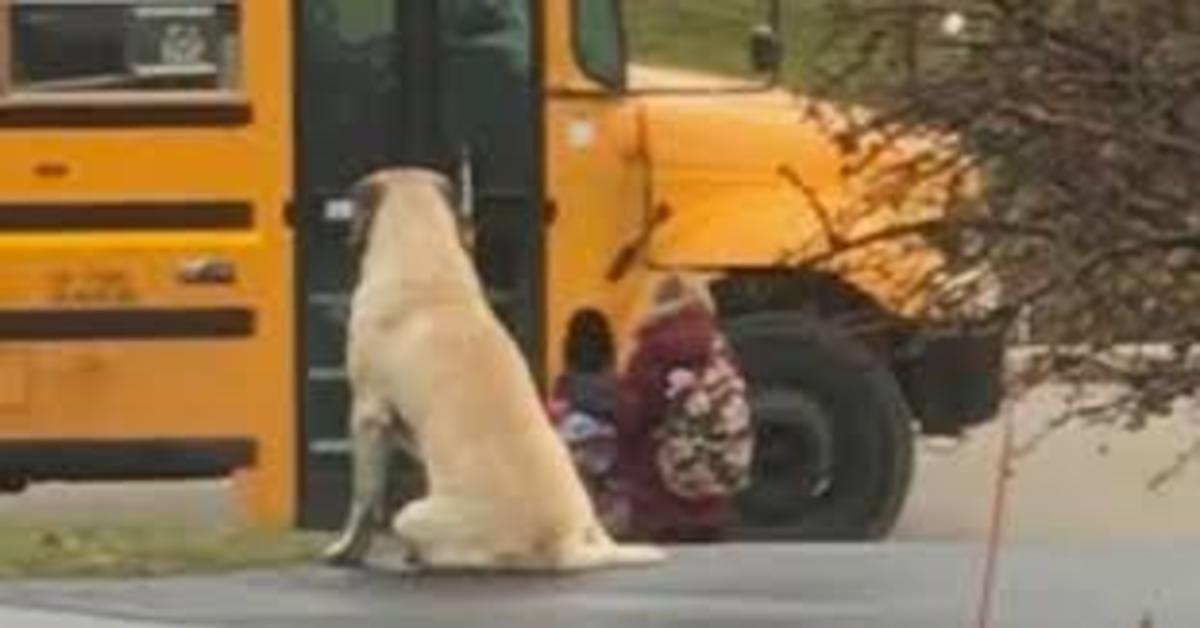 Gordon, il cucciolo di Mastiff che ogni giorno accompagna alla fermata del bus due bambine (VIDEO)