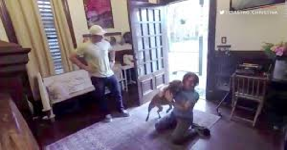 Il cucciolo di cane impazzisce di gioia quando rivede la sua padrona, l'astronauta Christina Koch di ritorno dallo spazio (VIDEO)