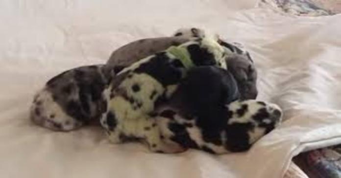 cuccioli dei quali uno verde