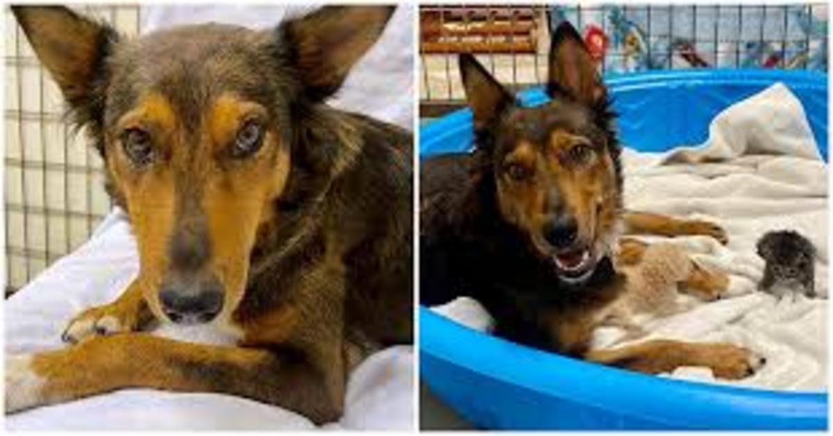 Georgia, la cucciola di cane che ha perso i suoi cuccioli e ha adottato tre gattini orfani (VIDEO)