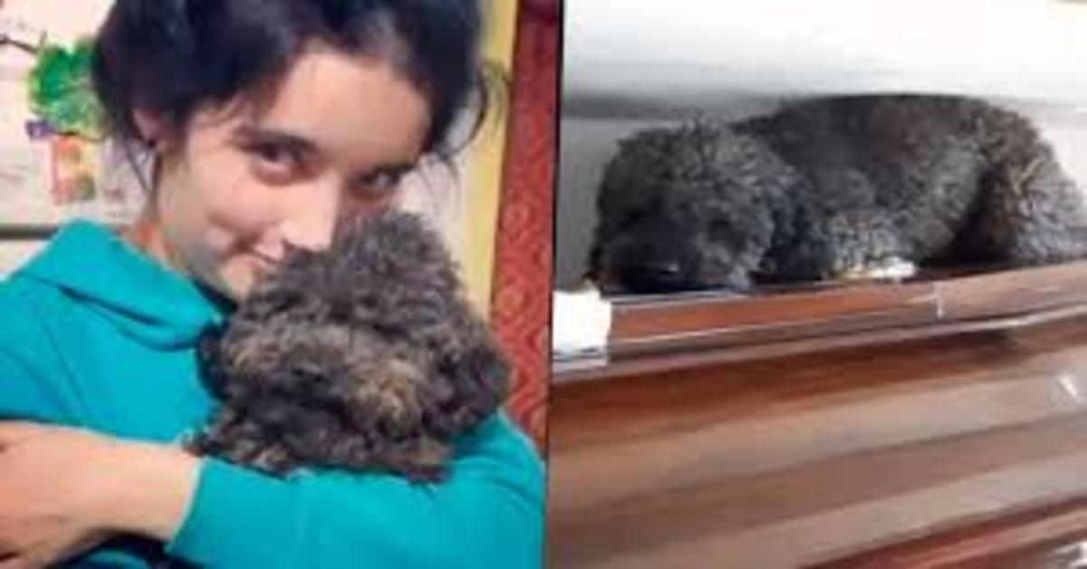 Benito, il cucciolo di Barbone che non dimentica la sua mamma umana morta da anni (VIDEO)