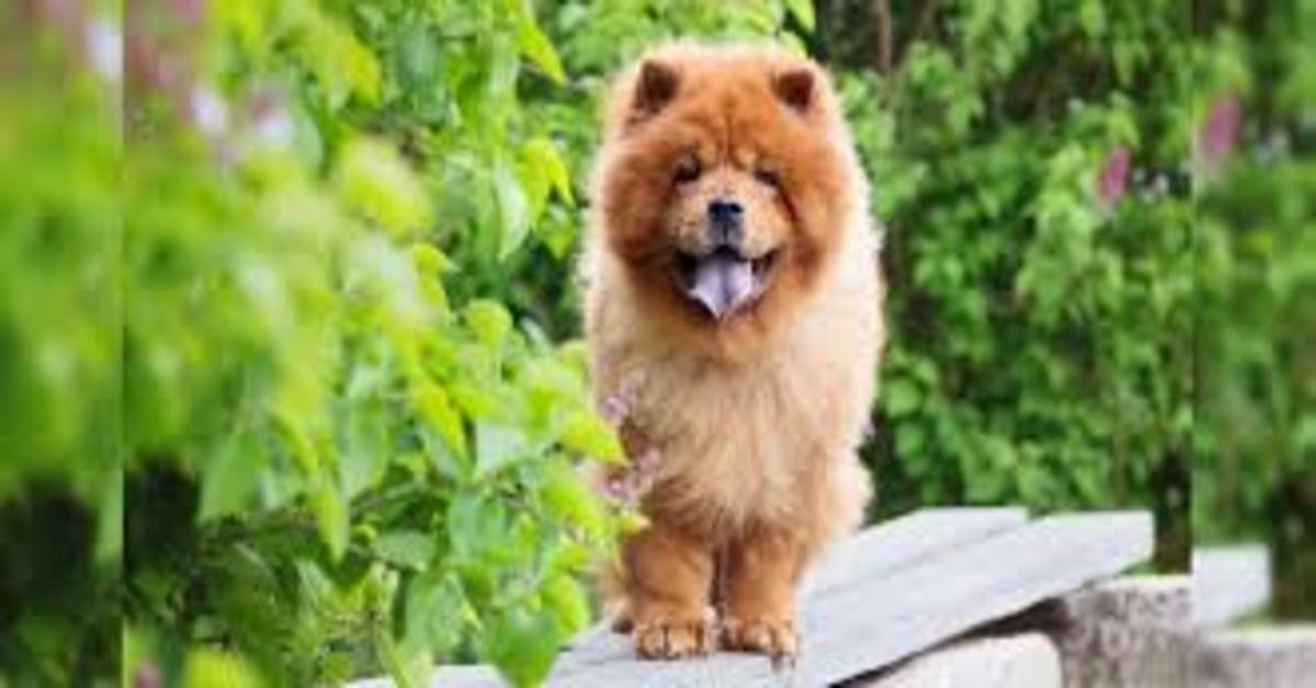 Svelato il cane perfetto per chi ama i gatti: con lui si va sul sicuro