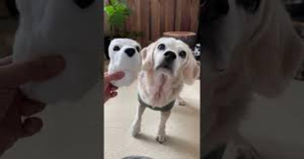 Un ragazzo crea una geniale replica di lana del muso del suo cucciolo di cane, Puri (VIDEO)