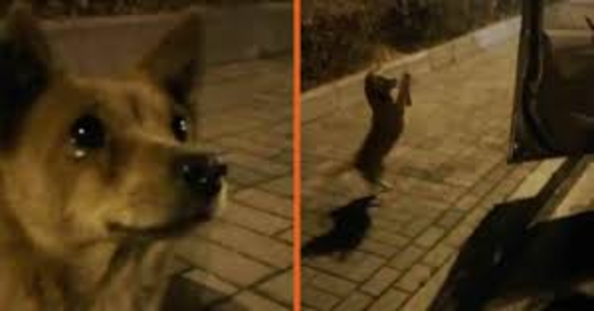 Commuove il web il cucciolo di cane randagio che ha gli occhi pieni di lacrime quando riceve del cibo da alcuni passanti (VIDEO)